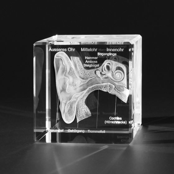 Anatomy motive in 3D - Grüner Laser Products