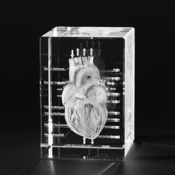 3D ANATOMY - Anatomy Models